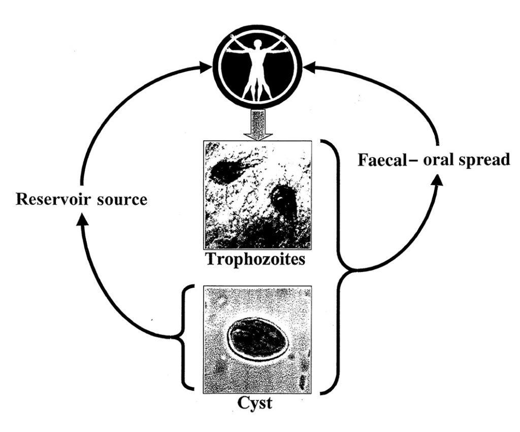 giardia routes of infection natural treatment australia naturopath