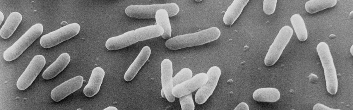 bacteria dysbiosis infection lab testing byron bay australia