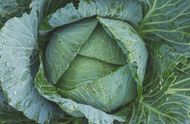glutamine heal leaky gut intestinal permeability herbalism byron bay australia