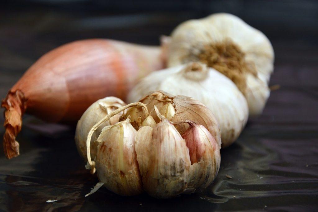 garlic herbal medicine antimicrobial herb gut health