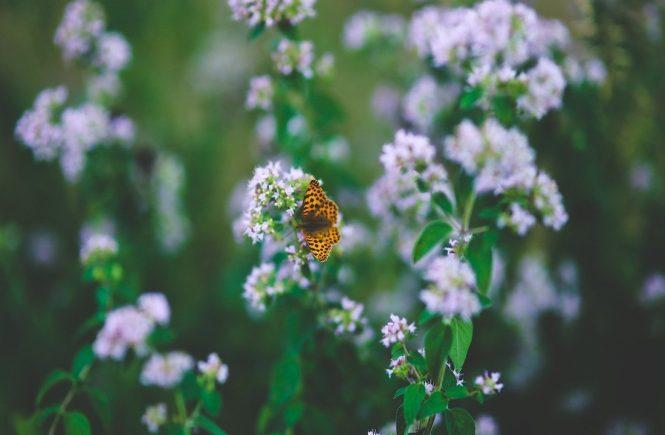 methane sibo natural treatments herbal medicine SIBO